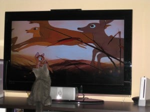 Bobby vorm TV - Katzenkratzbaum Ratgeber