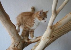 Wandkratzbaum Naturholz