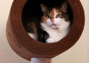 Wandkratzbaum für schwere Katzen